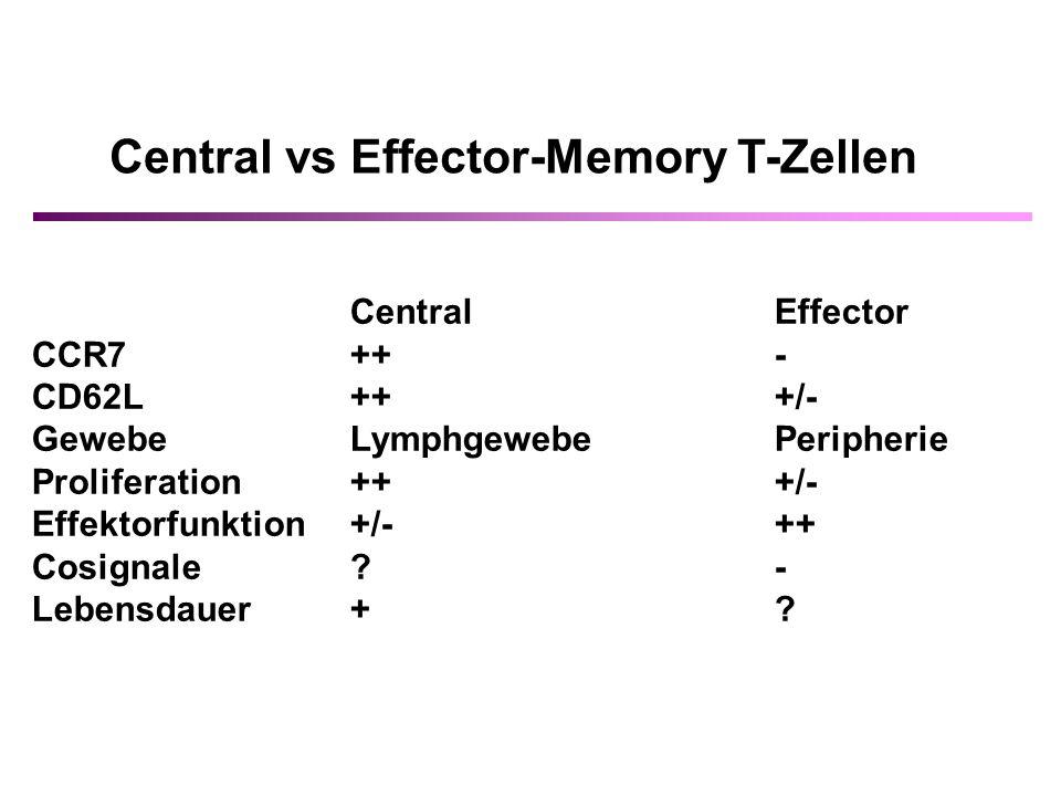 CentralEffector CCR7++- CD62L+++/- GewebeLymphgewebePeripherie Proliferation +++/- Effektorfunktion +/-++ Cosignale?- Lebensdauer+?
