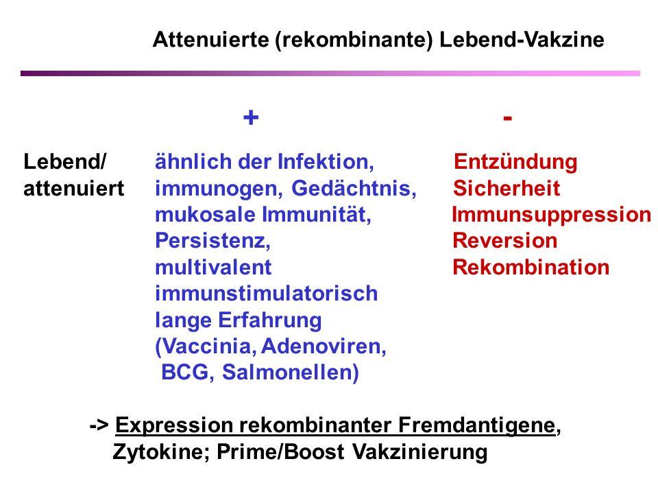 + - Lebend/ ähnlich der Infektion, Entzündung attenuiert immunogen, Gedächtnis, Sicherheit mukosale Immunität, Immunsuppression Persistenz, Reversion multivalent Rekombination immunstimulatorisch lange Erfahrung (Vaccinia, Adenoviren, BCG, Salmonellen) -> Expression rekombinanter Fremdantigene, Zytokine; Prime/Boost Vakzinierung Attenuierte (rekombinante) Lebend-Vakzine