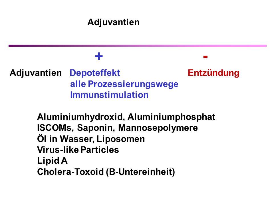 Adjuvantien Depoteffekt Entzündung alle Prozessierungswege Immunstimulation Aluminiumhydroxid, Aluminiumphosphat ISCOMs, Saponin, Mannosepolymere Öl in Wasser, Liposomen Virus-like Particles Lipid A Cholera-Toxoid (B-Untereinheit) + - Adjuvantien