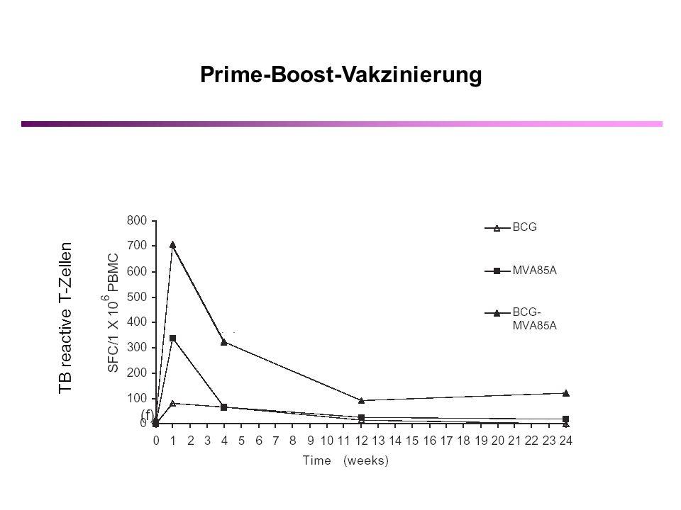 Prime-Boost-Vakzinierung TB reactive T-Zellen