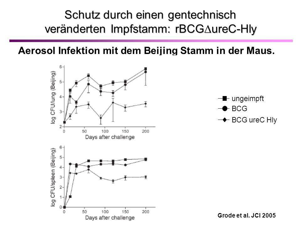 Schutz durch einen gentechnisch veränderten Impfstamm: rBCG ureC-Hly Aerosol Infektion mit dem Beijing Stamm in der Maus.