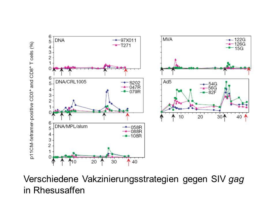 Verschiedene Vakzinierungsstrategien gegen SIV gag in Rhesusaffen