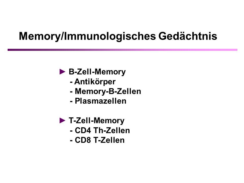 Memory/Immunologisches Gedächtnis B-Zell-Memory - Antikörper - Memory-B-Zellen - Plasmazellen T-Zell-Memory - CD4 Th-Zellen - CD8 T-Zellen