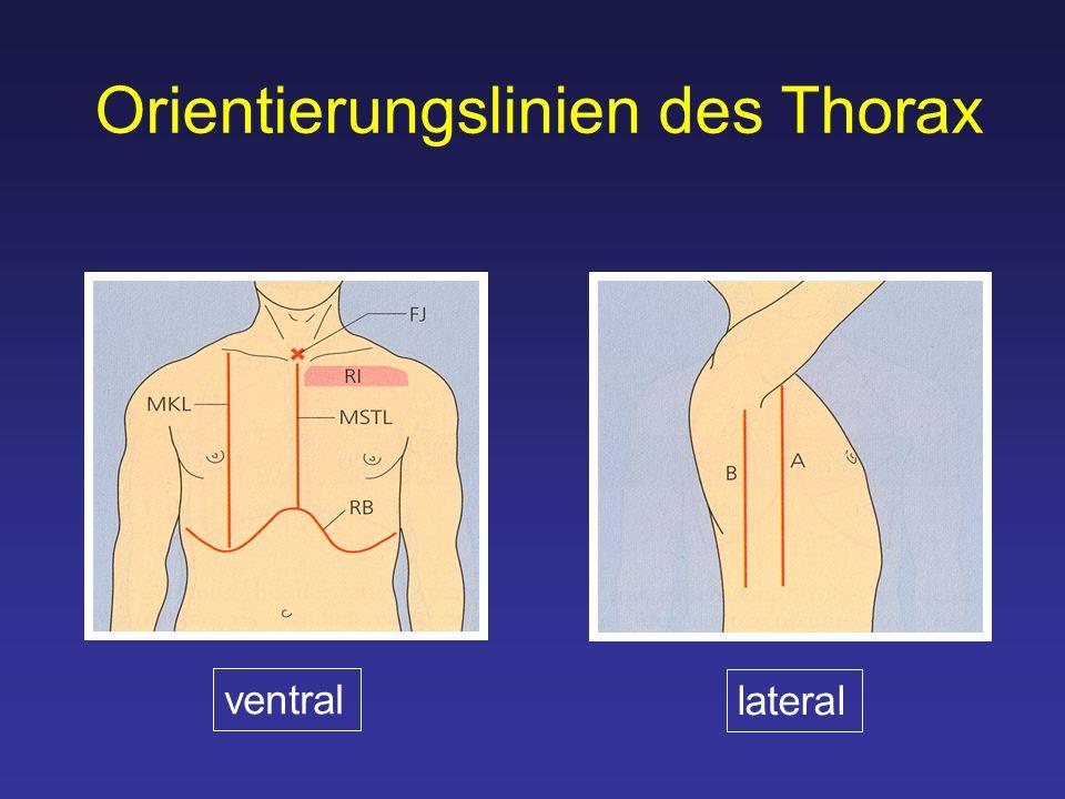 Orientierungslinien des Thorax ventral lateral