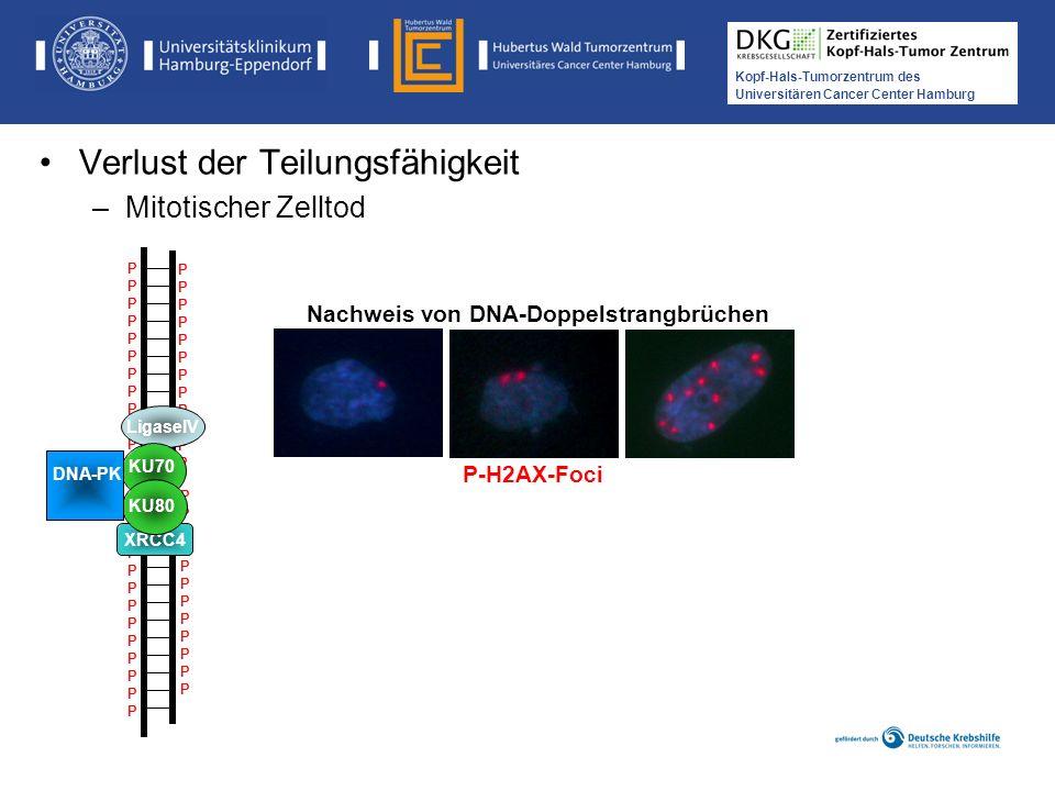Medikamentöse Tumortherapie der Kopf-, Hals-Tumoren Kopf-Hals-Tumorzentrum des Universitären Cancer Center Hamburg P-H2AX-Foci Nachweis von DNA-Doppel