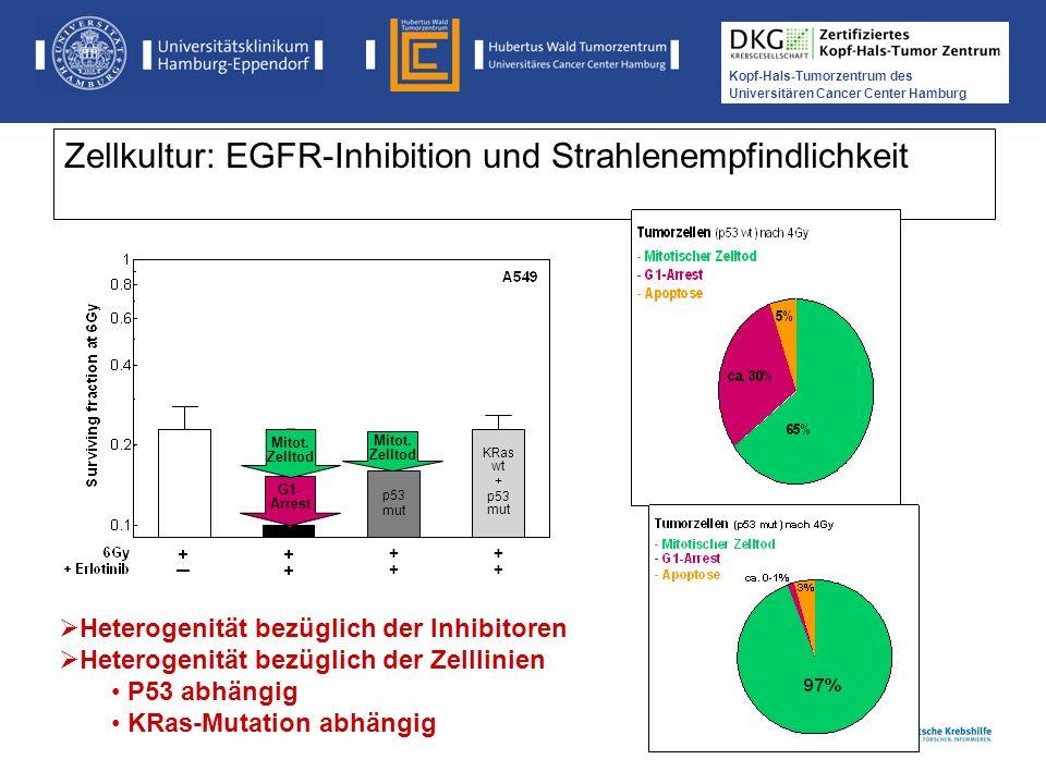 Medikamentöse Tumortherapie der Kopf-, Hals-Tumoren Kopf-Hals-Tumorzentrum des Universitären Cancer Center Hamburg Zellkultur: EGFR-Inhibition und Str