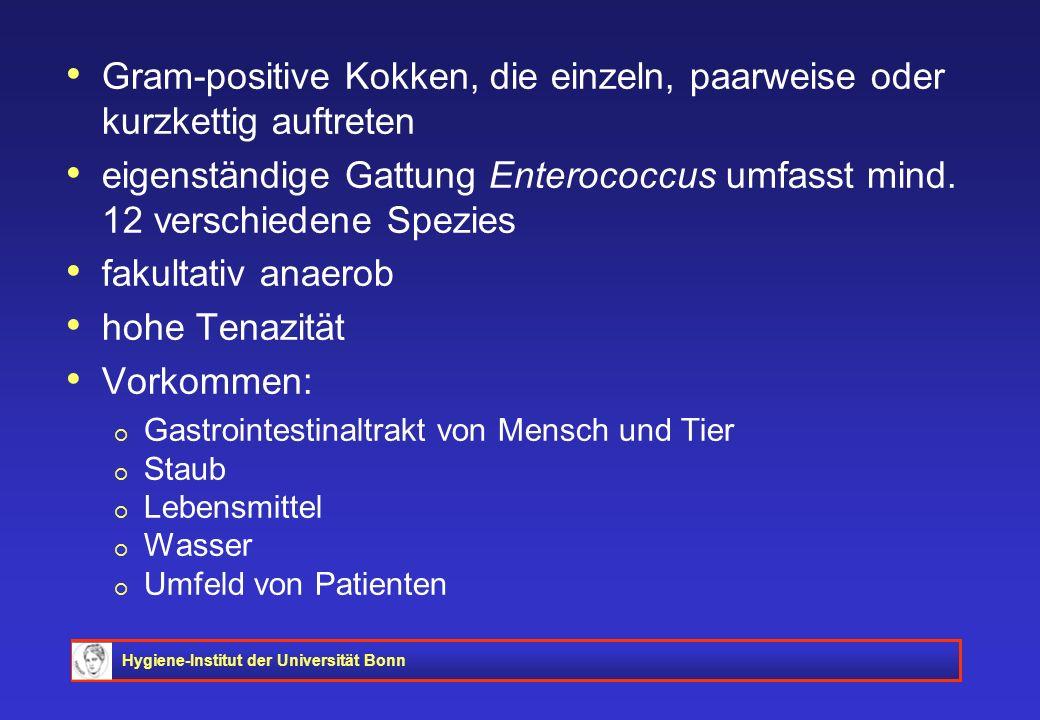 Hygiene-Institut der Universität Bonn Gram-positive Kokken, die einzeln, paarweise oder kurzkettig auftreten eigenständige Gattung Enterococcus umfass