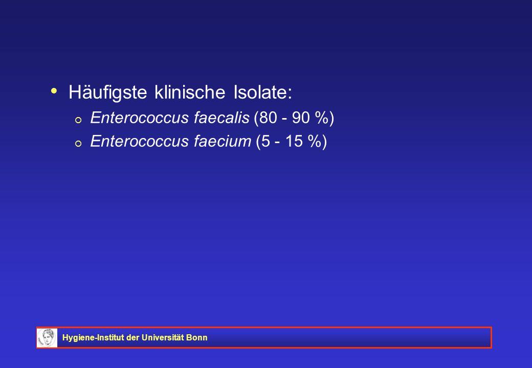 Hygiene-Institut der Universität Bonn Häufigste klinische Isolate: Enterococcus faecalis (80 - 90 %) Enterococcus faecium (5 - 15 %)