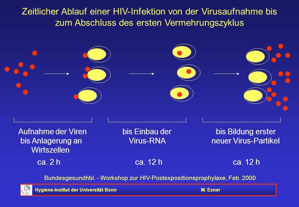 Hygiene-Institut der Universität BonnM. Exner Bundesgesundhbl. - Workshop zur HIV-Postexpositionsprophylaxe, Feb. 2000 Aufnahme der Viren bis Einbau d