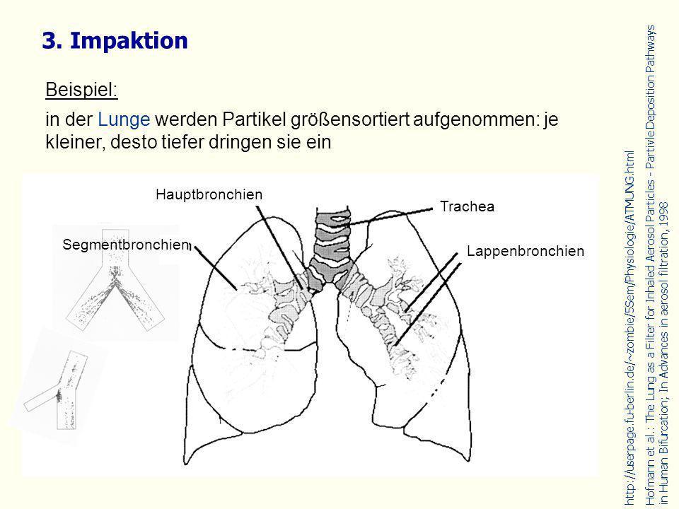 Beispiel: in der Lunge werden Partikel größensortiert aufgenommen: je kleiner, desto tiefer dringen sie ein 3. Impaktion http://userpage.fu-berlin.de/