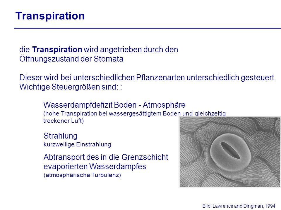 die Transpiration wird angetrieben durch den Öffnungszustand der Stomata Dieser wird bei unterschiedlichen Pflanzenarten unterschiedlich gesteuert. Wi