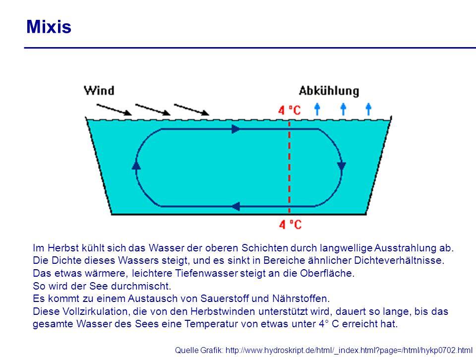 Mixis Im Herbst kühlt sich das Wasser der oberen Schichten durch langwellige Ausstrahlung ab. Die Dichte dieses Wassers steigt, und es sinkt in Bereic