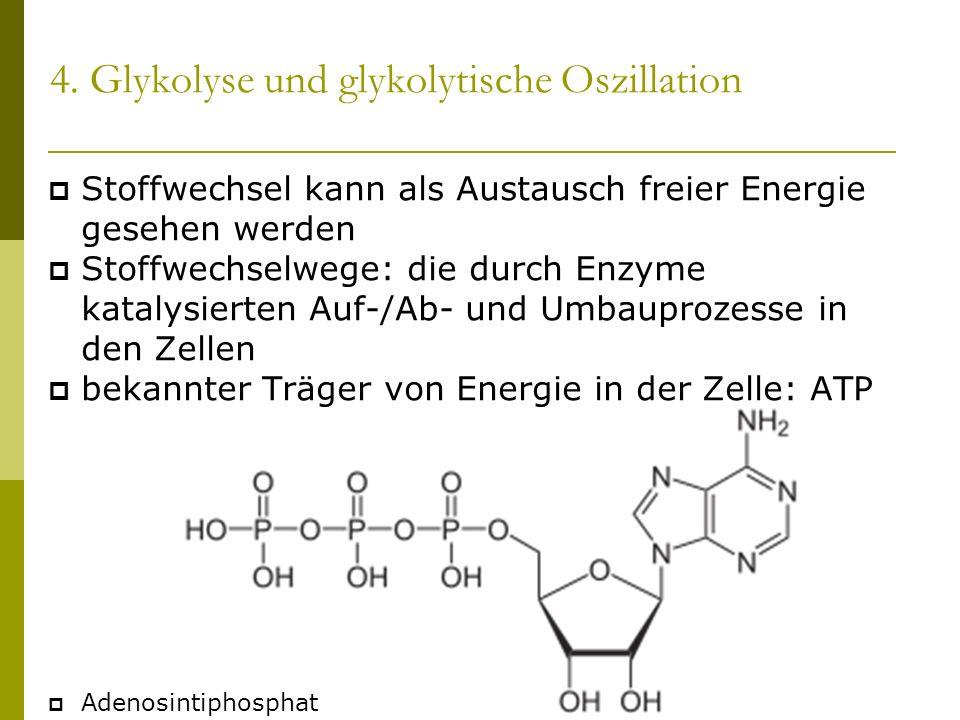 4. Glykolyse und glykolytische Oszillation Stoffwechsel kann als Austausch freier Energie gesehen werden Stoffwechselwege: die durch Enzyme katalysier