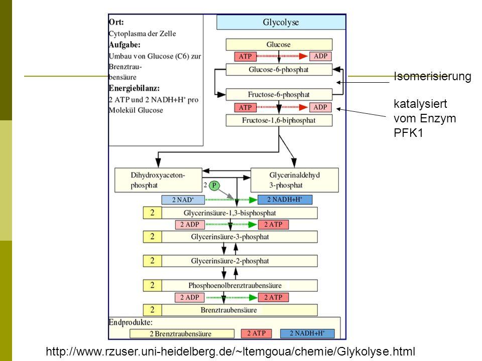 katalysiert vom Enzym PFK1 Isomerisierung http://www.rzuser.uni-heidelberg.de/~ltemgoua/chemie/Glykolyse.html