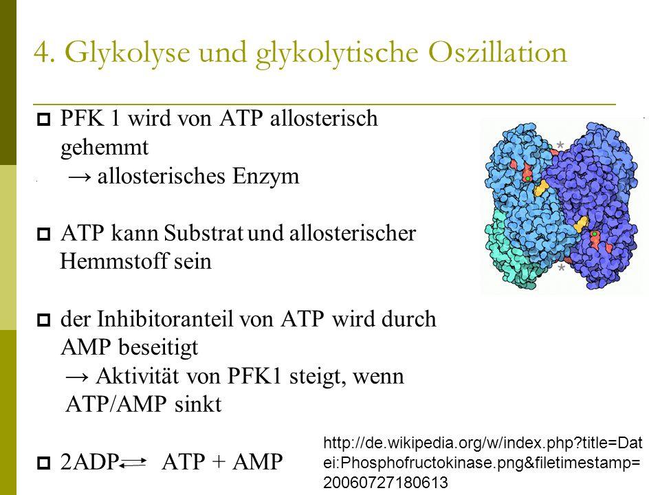 4. Glykolyse und glykolytische Oszillation PFK 1 wird von ATP allosterisch gehemmt allosterisches Enzym ATP kann Substrat und allosterischer Hemmstoff