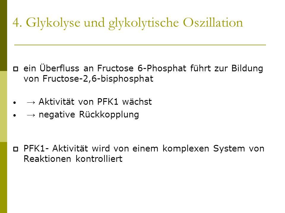 4. Glykolyse und glykolytische Oszillation ein Überfluss an Fructose 6-Phosphat führt zur Bildung von Fructose-2,6-bisphosphat Aktivität von PFK1 wäch