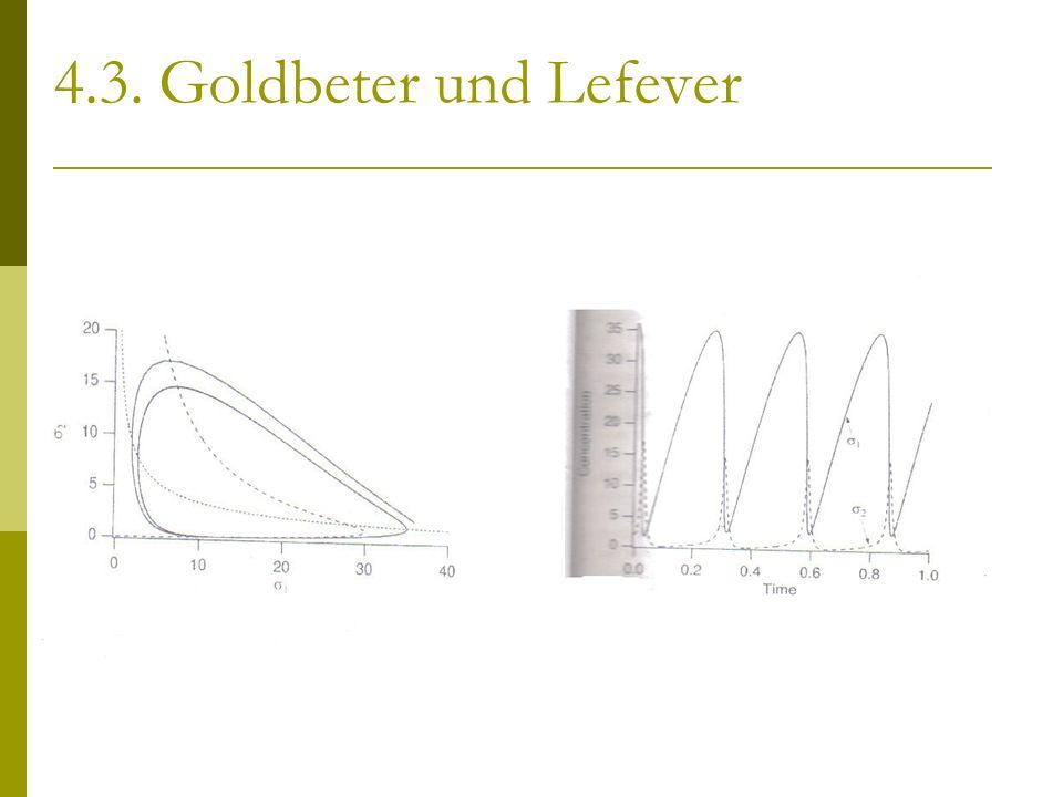 4.3. Goldbeter und Lefever