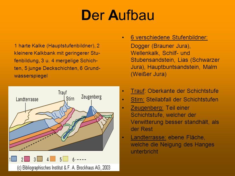 Der Aufbau 1 harte Kalke (Hauptstufenbildner), 2 kleinere Kalkbank mit geringerer Stu- fenbildung, 3 u. 4 mergelige Schich- ten, 5 junge Deckschichten