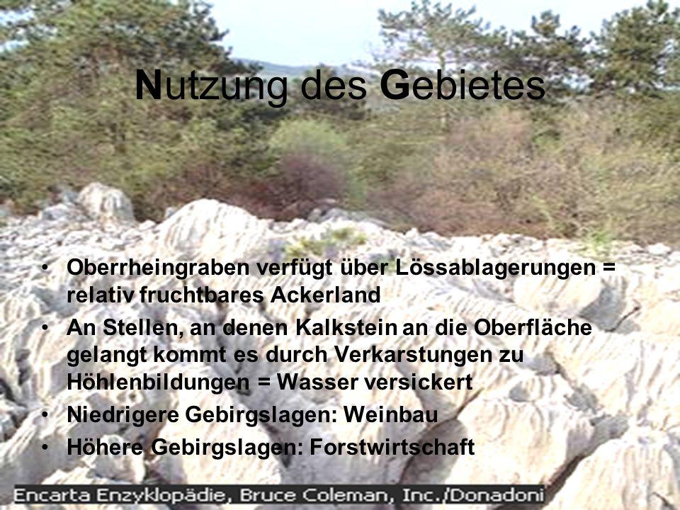 Nutzung des Gebietes Oberrheingraben verfügt über Lössablagerungen = relativ fruchtbares Ackerland An Stellen, an denen Kalkstein an die Oberfläche ge