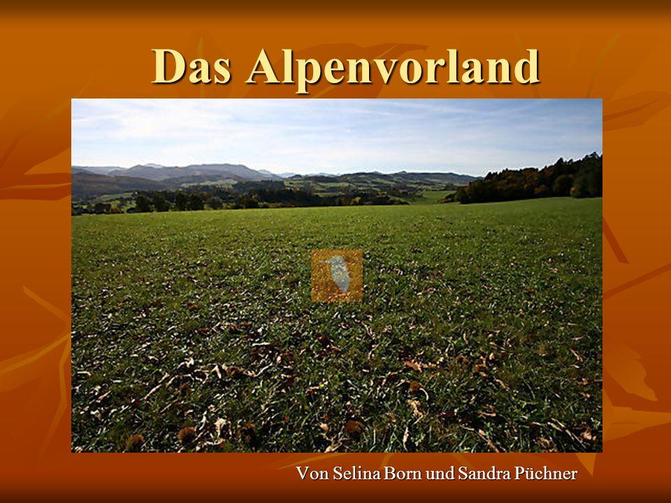Das Alpenvorland Von Selina Born und Sandra Püchner
