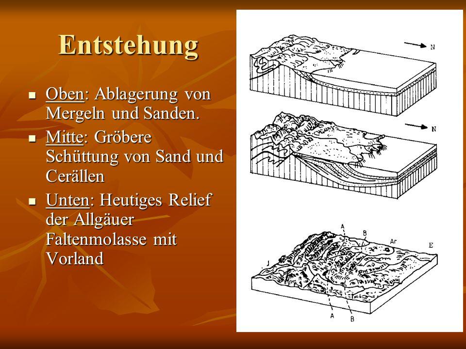 Entstehung Oben: Ablagerung von Mergeln und Sanden. Oben: Ablagerung von Mergeln und Sanden. Mitte: Gröbere Schüttung von Sand und Cerällen Mitte: Grö