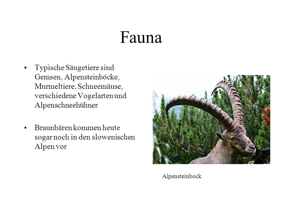 Flora Im Alpenraum gibt es rund 4500 Blumenarten Alpenflora enthält viele arktisch- alpine Elemente Bedingt durch die Vergletscherung sind bestimmte P