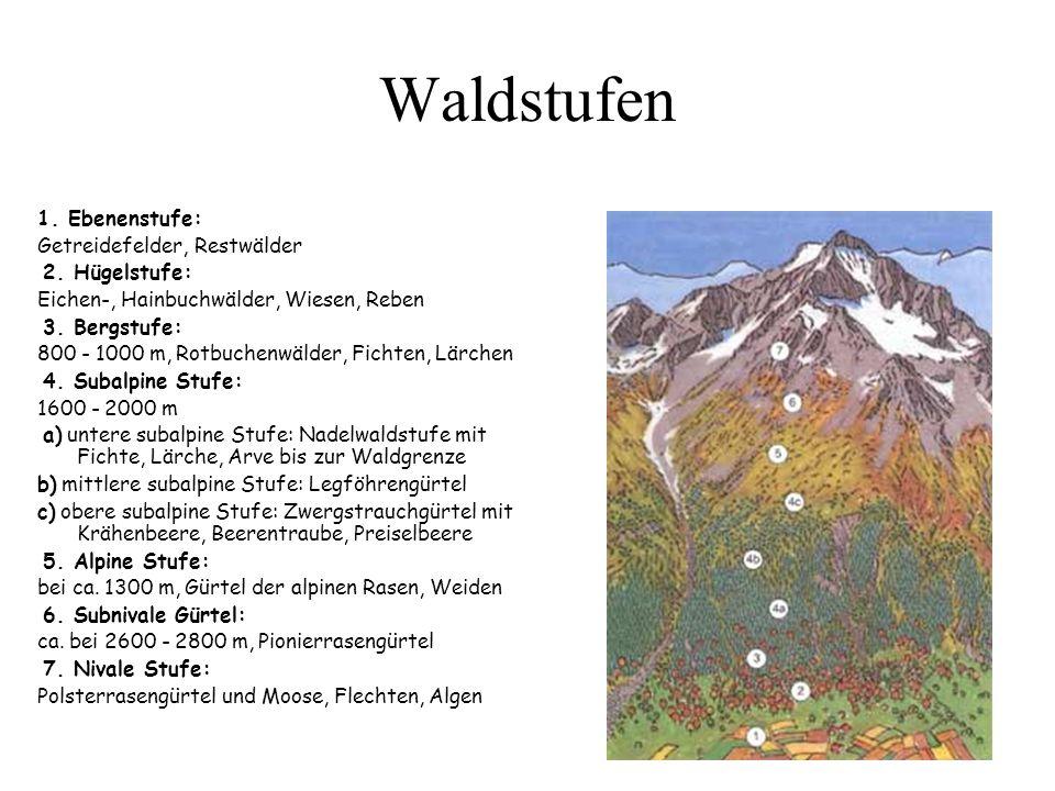 Waldstufen 1.Ebenenstufe: Getreidefelder, Restwälder 2.