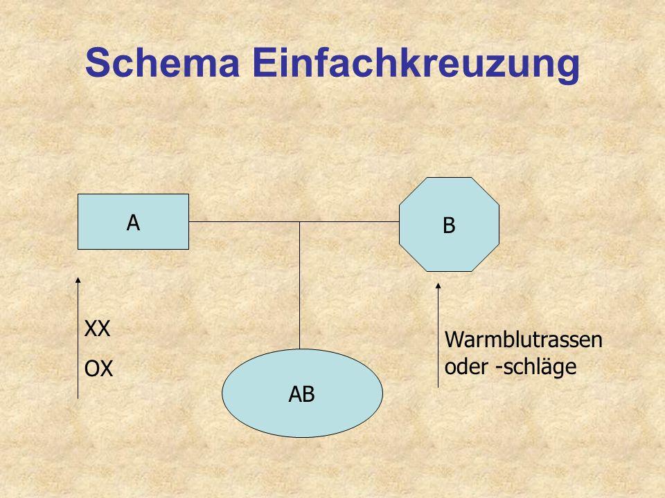 Linienzucht: Gratwanderung A Startpopulation C E F B D 1. Gen. 2. Gen. 3. Gen. A-F: Väter- Linienzucht auf A und C A:25% A:25 %; C:25% A:18,75%; C:25%
