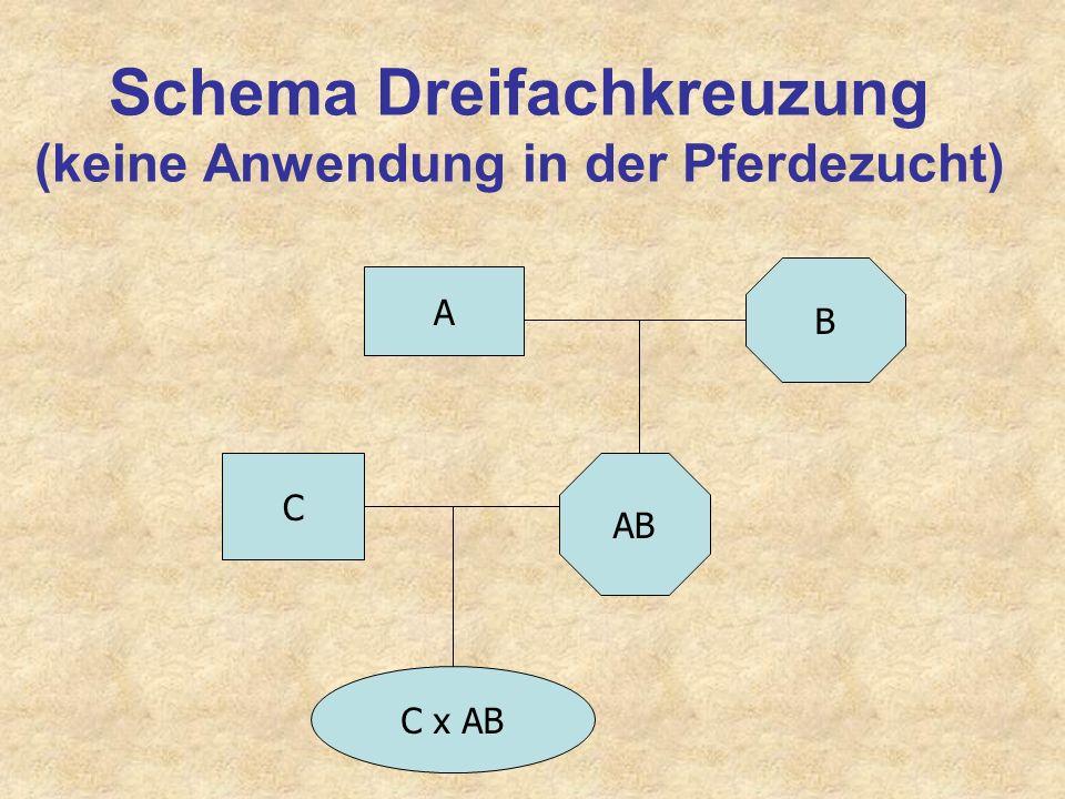 Ziele von Kreuzungszucht 1.Schnelle (F1 bei Einfachkreuzung) Nutzung genetisch additiver Effekte spezieller Vater- und Mutterrassen (Stellungseffekte)