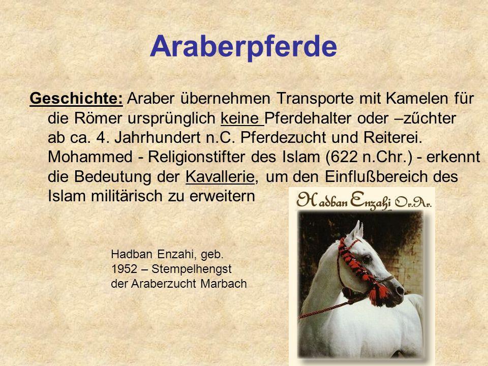 Űbersicht Pferderassen 1. Vollblut Reinzucht, Selektion auf Rennleistung Arabisches Vollblut (ox) Arabisches Vollblut (AV), Araber (A), Anglo-Araber (