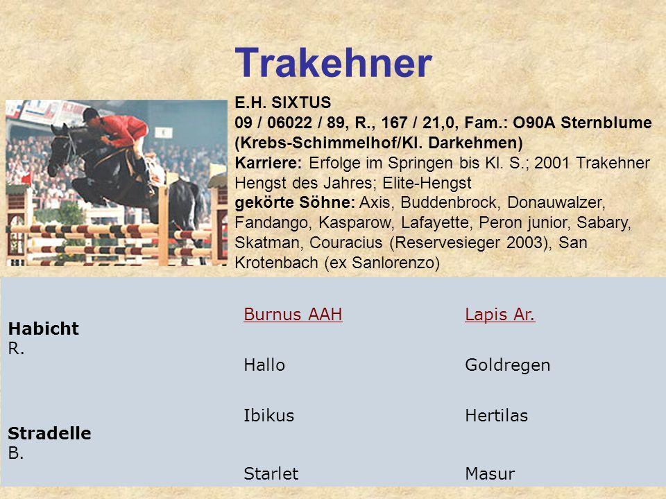 Trakehner E.H. SIXTUS 09 / 06022 / 89, R., 167 / 21,0, Fam.: O90A Sternblume (Krebs-Schimmelhof/Kl. Darkehmen) Karriere: Erfolge im Springen bis Kl. S