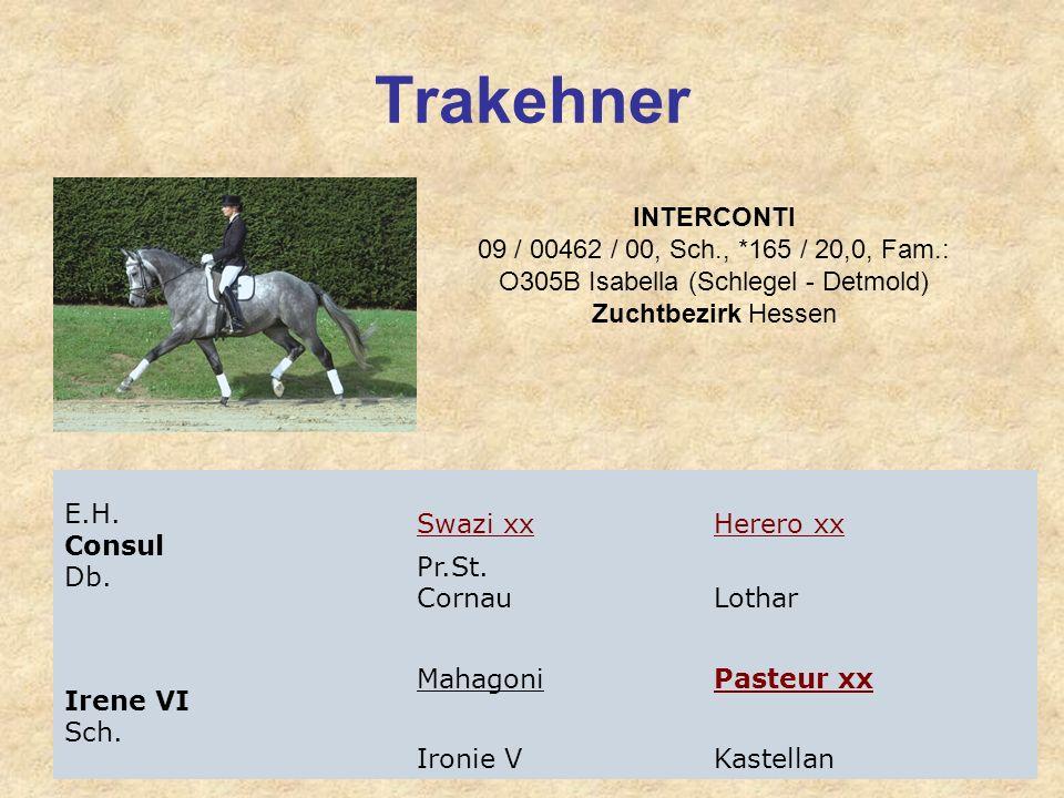 Trakehner INTERCONTI 09 / 00462 / 00, Sch., *165 / 20,0, Fam.: O305B Isabella (Schlegel - Detmold) Zuchtbezirk Hessen E.H. Consul Db. Swazi xxHerero x
