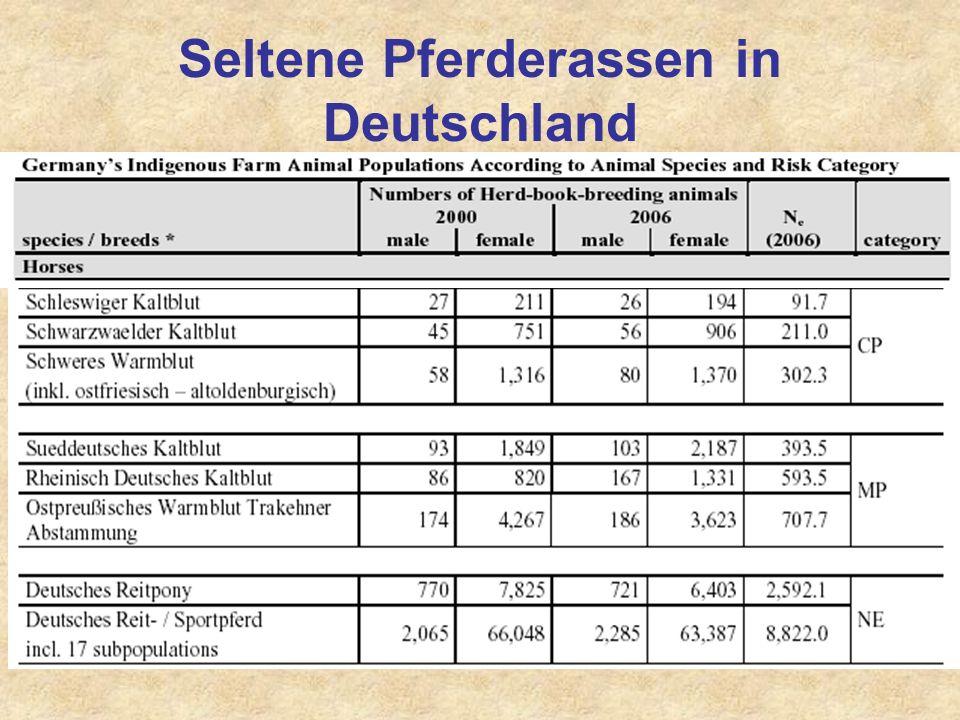 Seltene Pferderassen in Deutschland