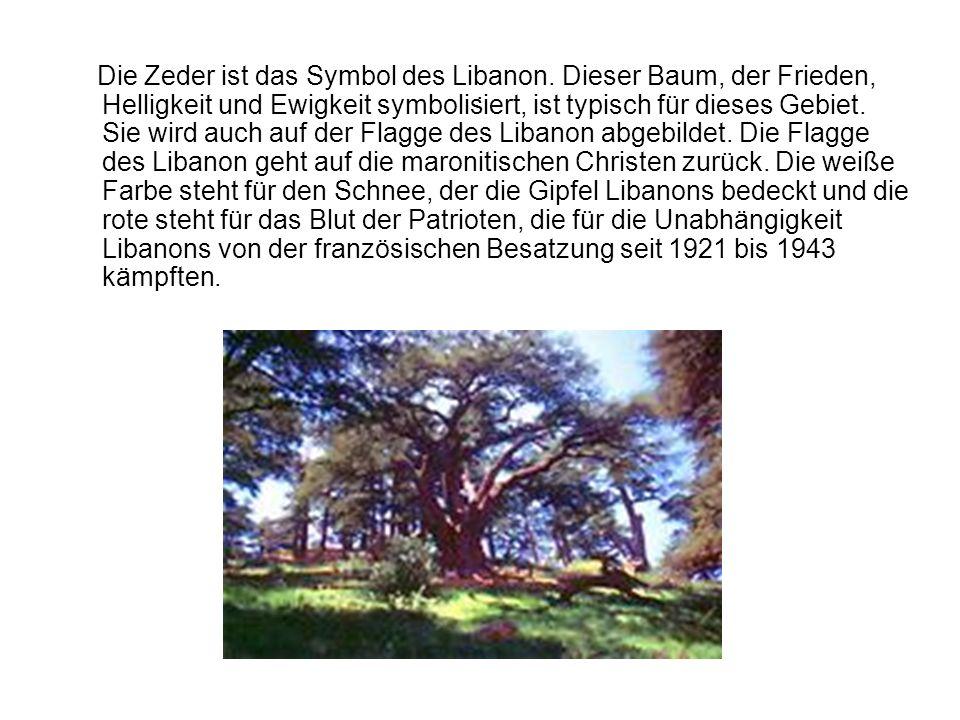 . Die Zeder ist das Symbol des Libanon. Dieser Baum, der Frieden, Helligkeit und Ewigkeit symbolisiert, ist typisch für dieses Gebiet. Sie wird auch a