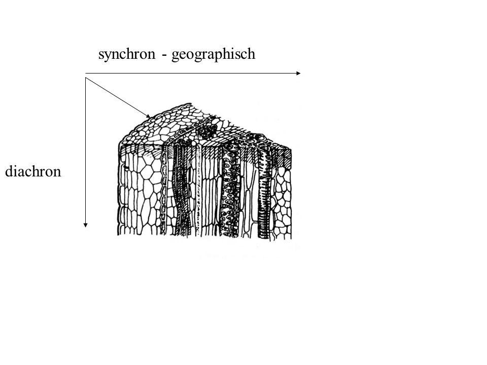 synchron - geographisch diachron