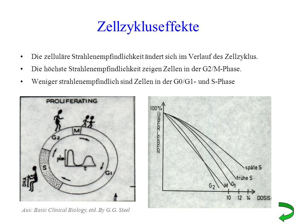 Zellzykluseffekte Die zelluläre Strahlenempfindlichkeit ändert sich im Verlauf des Zellzyklus. Die höchste Strahlenempfindlichkeit zeigen Zellen in de