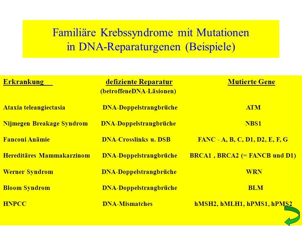 Familiäre Krebssyndrome mit Mutationen in DNA-Reparaturgenen (Beispiele) Erkrankung defiziente Reparatur Mutierte Gene (betroffeneDNA-Läsionen) Ataxia