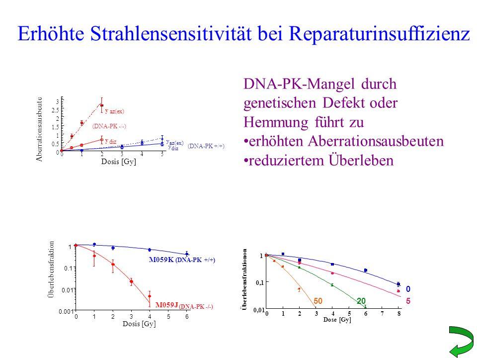 Erhöhte Strahlensensitivität bei Reparaturinsuffizienz 0.001 0.01 0.1 1 0123456 Überlebensfraktion Dosis [Gy] M059K (DNA-PK +/+) M059J (DNA-PK -/-) 0