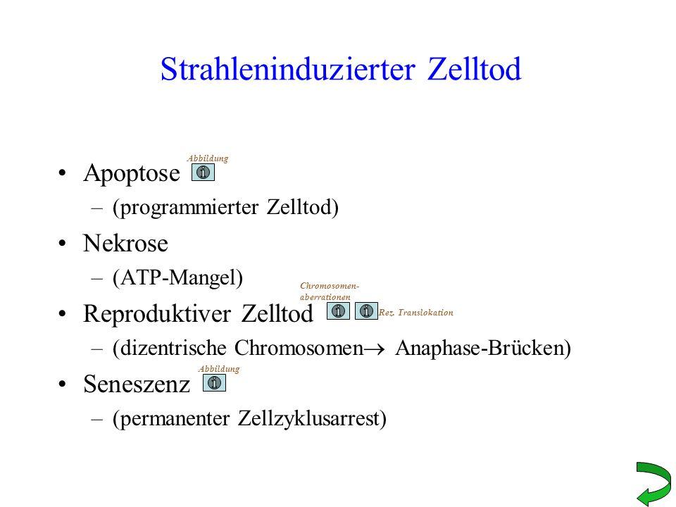 Dosis-Effekt-Beziehungen Bestrahlen von Zellen mit unterschiedlichen Einzeldosen Bebrüten bis zur Koloniebildung (ca.