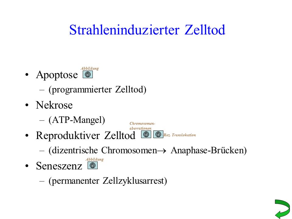 Strahleninduzierter Zelltod Apoptose –(programmierter Zelltod) Nekrose –(ATP-Mangel) Reproduktiver Zelltod –(dizentrische Chromosomen Anaphase-Brücken