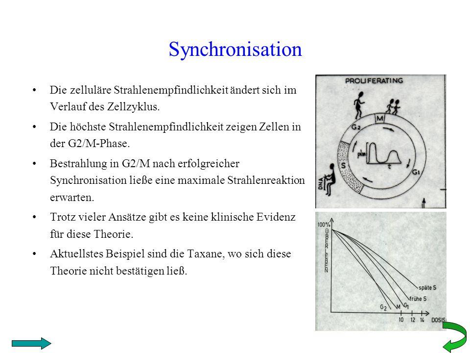 Synchronisation Die zelluläre Strahlenempfindlichkeit ändert sich im Verlauf des Zellzyklus. Die höchste Strahlenempfindlichkeit zeigen Zellen in der