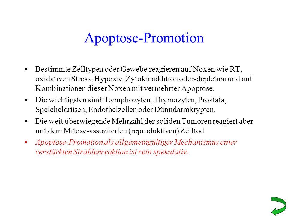 Apoptose-Promotion Bestimmte Zelltypen oder Gewebe reagieren auf Noxen wie RT, oxidativen Stress, Hypoxie, Zytokinaddition oder-depletion und auf Komb