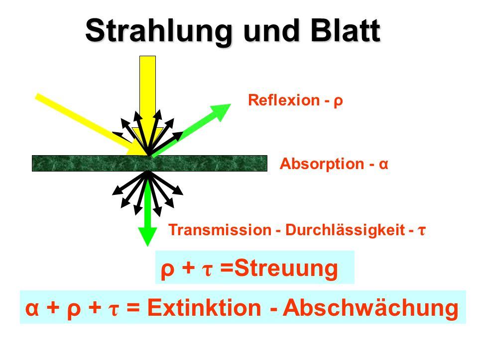 Strahlung und Blatt Absorption - α Reflexion - ρ Transmission - Durchlässigkeit - τ ρ + τ =Streuung α + ρ + τ = Extinktion - Abschwächung