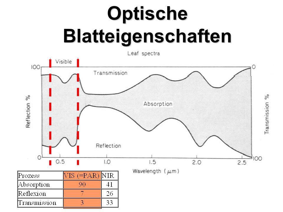 Optische Blatteigenschaften