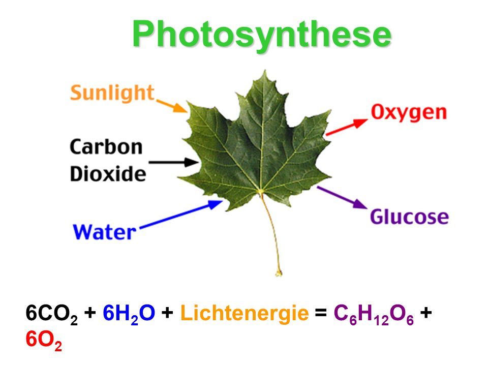 6CO 2 + 6H 2 O + Lichtenergie = C 6 H 12 O 6 + 6O 2 Photosynthese