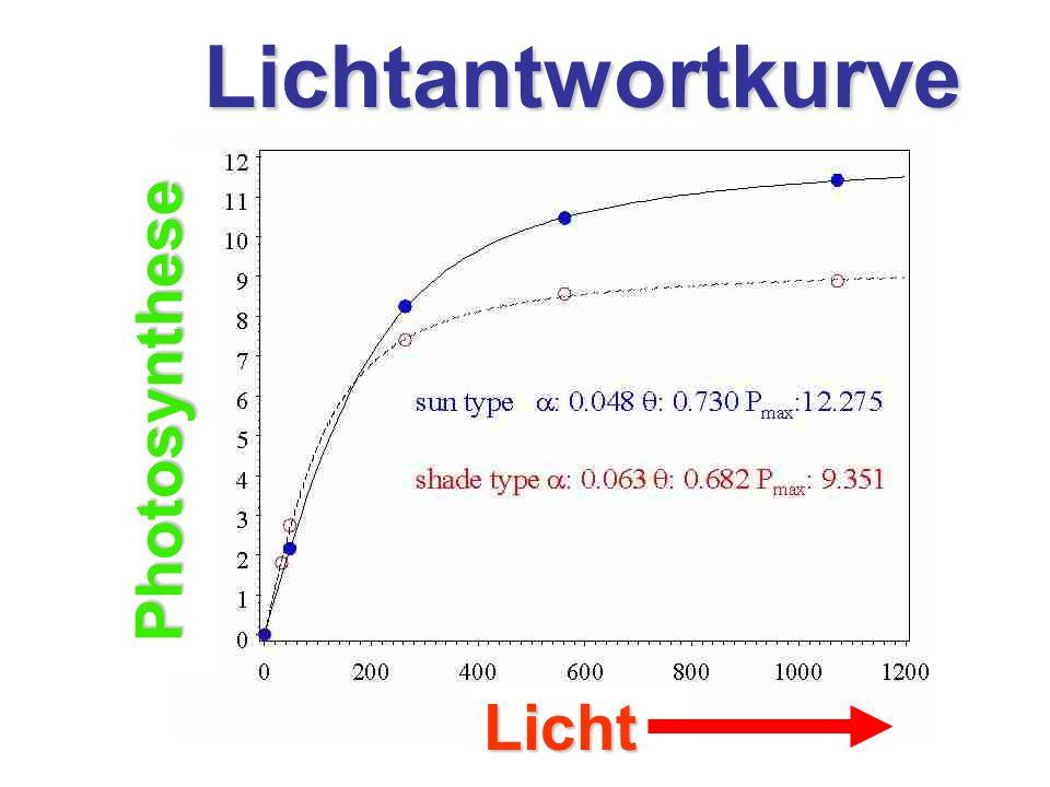 Licht Photosynthese Lichtantwortkurve