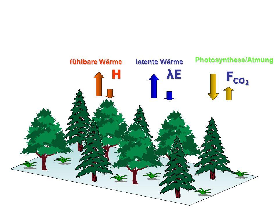 H λEλEλEλE F CO 2 fühlbare Wärme latente Wärme Photosynthese/Atmung