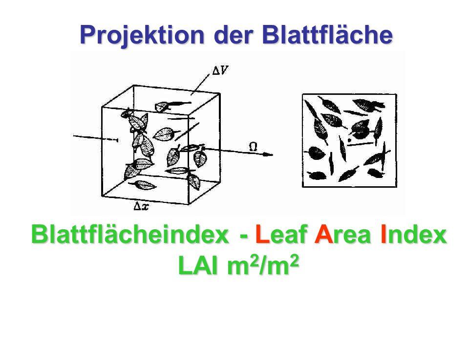 Projektion der Blattfläche Blattflächeindex - Leaf Area Index LAI m 2 /m 2