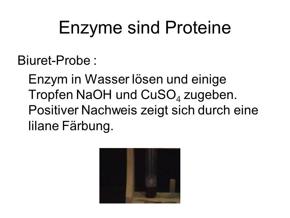 Enzyme sind Proteine Biuret-Probe : Enzym in Wasser lösen und einige Tropfen NaOH und CuSO 4 zugeben. Positiver Nachweis zeigt sich durch eine lilane