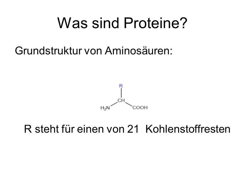 Was sind Proteine? Grundstruktur von Aminosäuren: R steht für einen von 21 Kohlenstoffresten